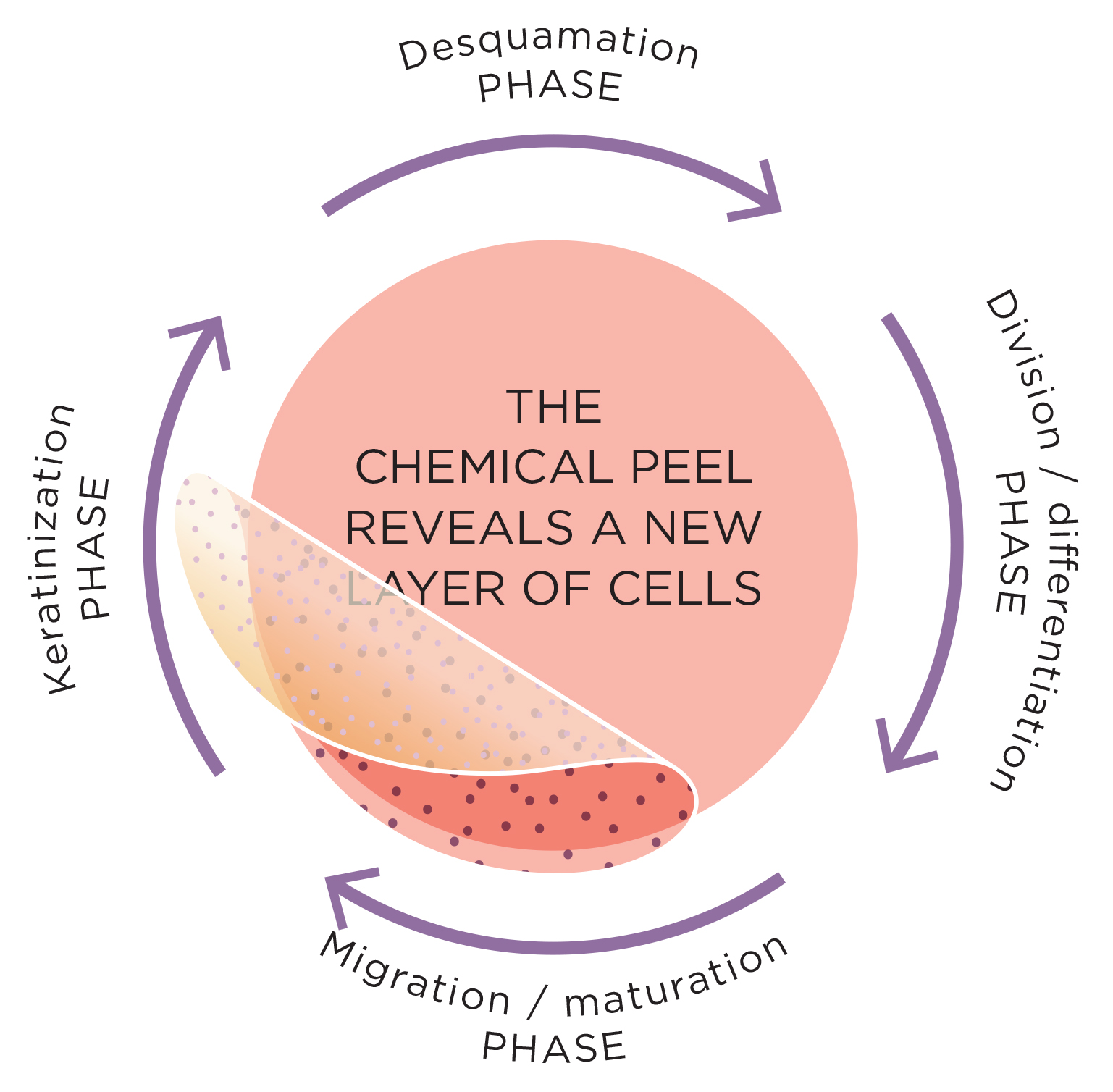 the renewal cycle of the skin  our chemical peels